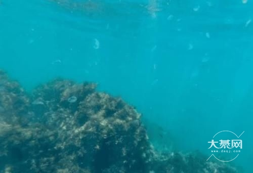 深海一万米到底有多恐怖?海底8200米,在这个深度已经没有鱼类生存了