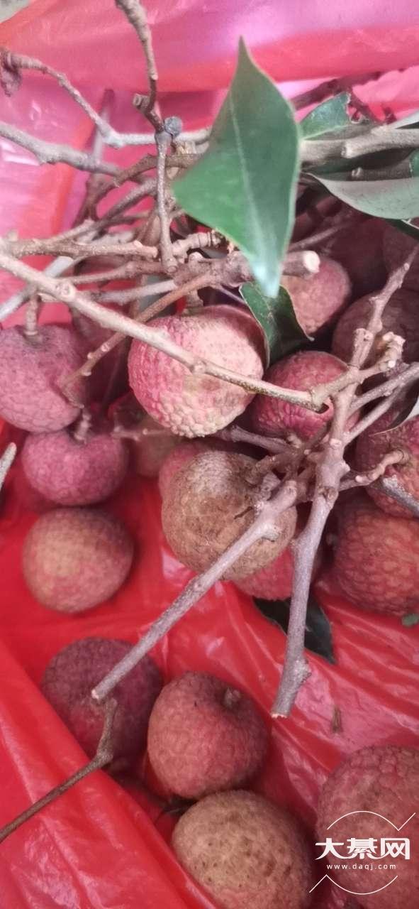 綦江的荔枝还是很便宜了,一斤才8块多