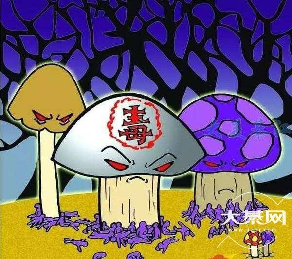 野生蘑菇吃不得,每年都有人中毒!不采摘、不买卖!