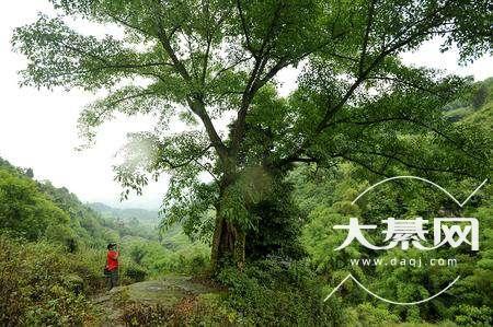 大垭场,川黔盐马古道上的边贸集市