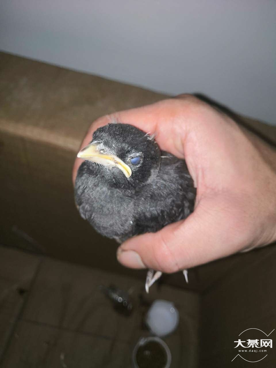 今天捡的,帮忙看看是什么鸟