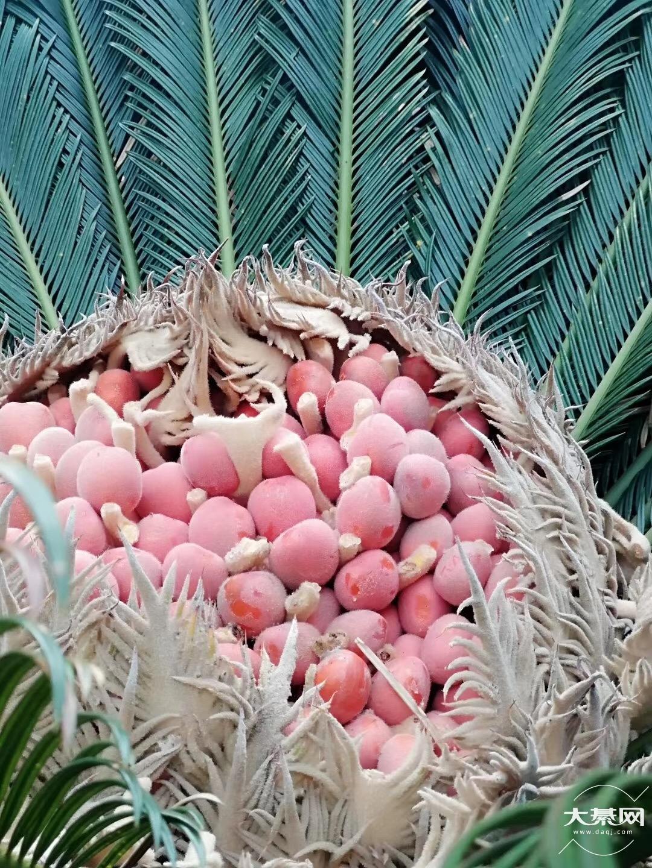 这个看起来像水果能吃吗?